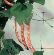 Сетка шпалерная для поддержки растений «Флора»